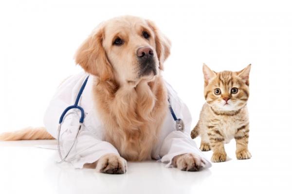 Ветеринарни консумативи