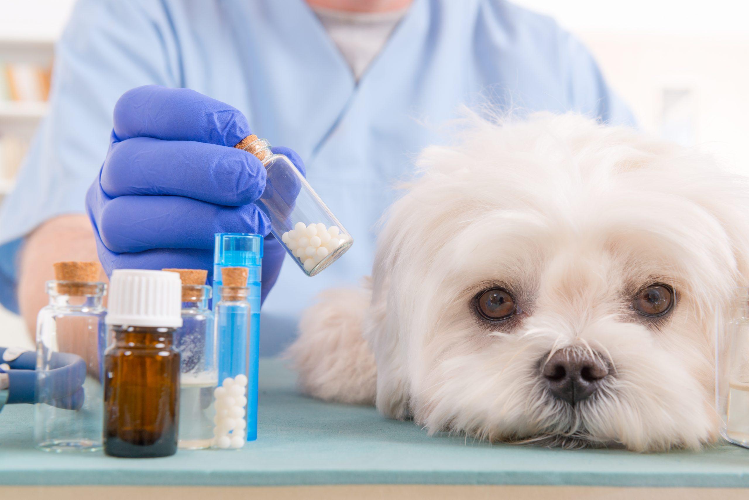 Ветеринарни аптеки