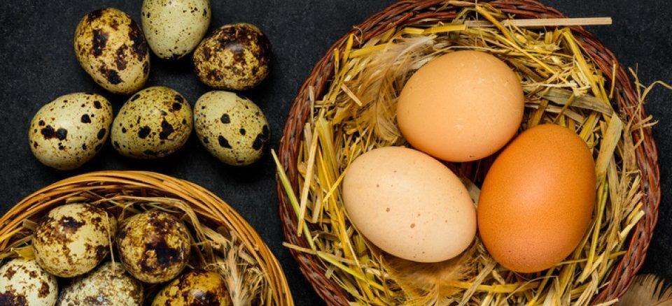 Пъдпъдъчи или кокоши яйца
